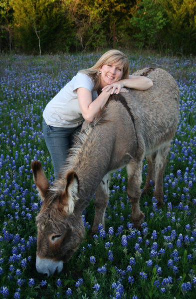 Flash, the Donkey - in bluebonnets