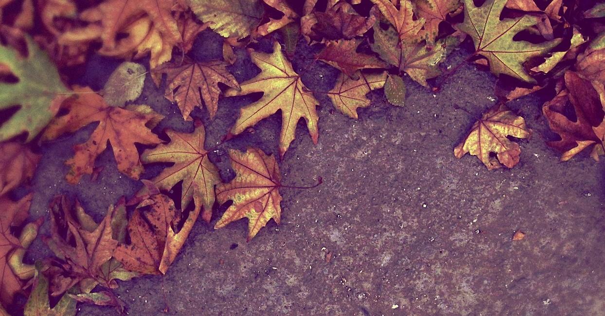 autumn-923836_1280